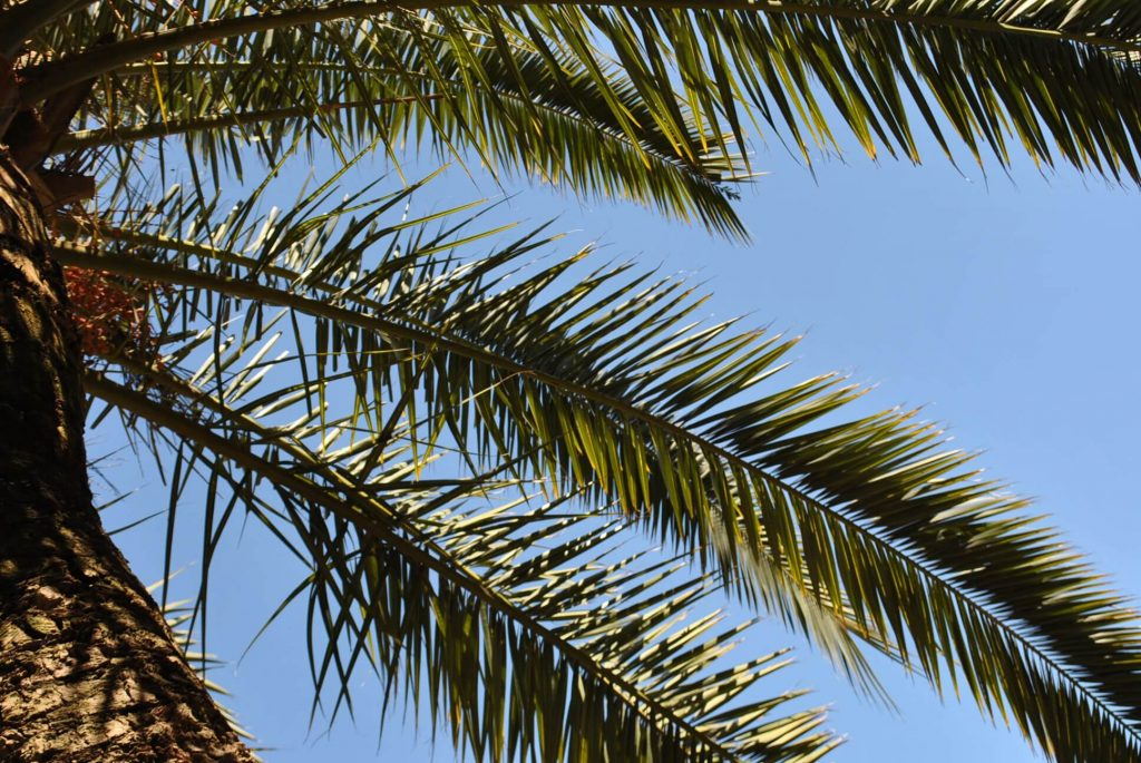 Pod palmami